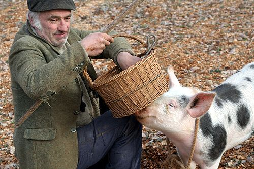 truffle hunter and his pig by daveleb, via Flickr