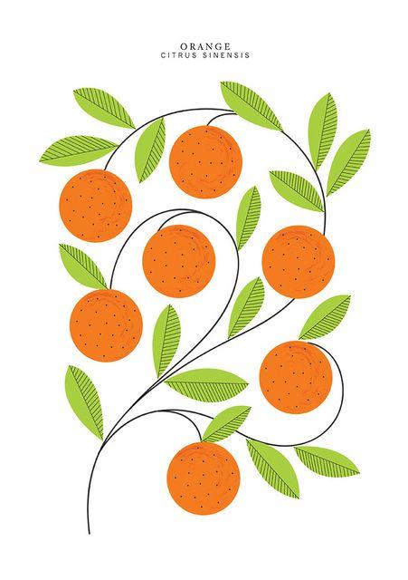 Beautiful classic illustration of oranges!