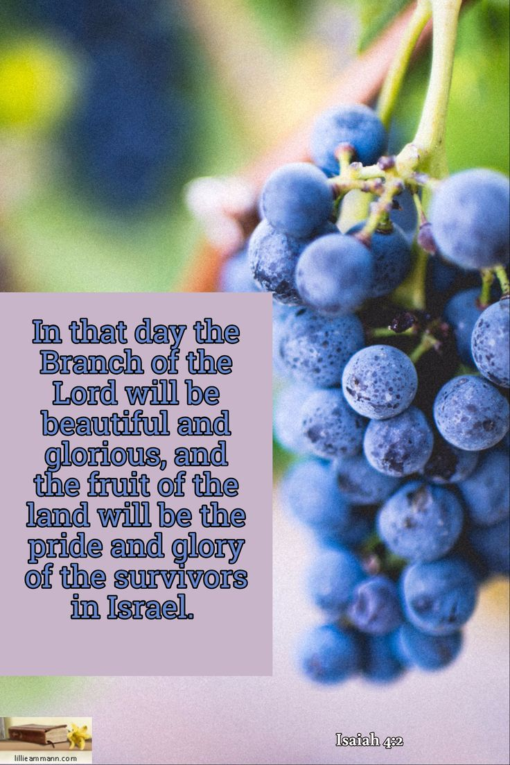Isaiah 4:2 / In that day the Branch of the Lord will be beautiful and glorious, and the fruit of the...