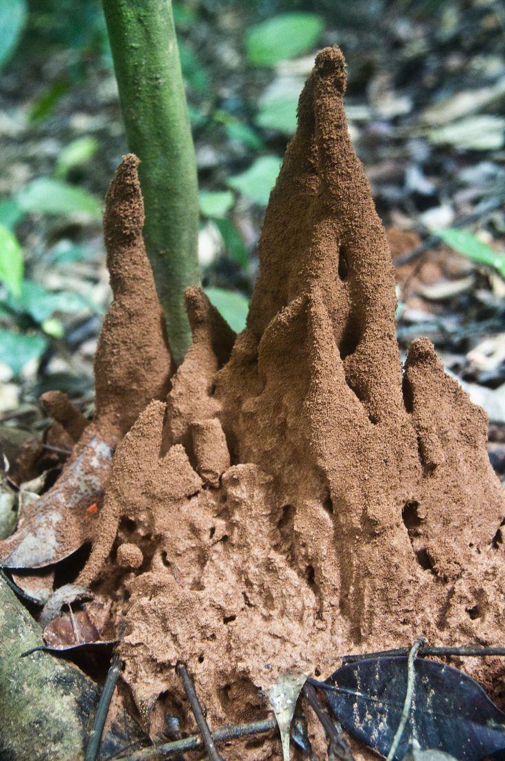 https://juliechristina.files.wordpress.com/2012/12/ant-hill1.jpg