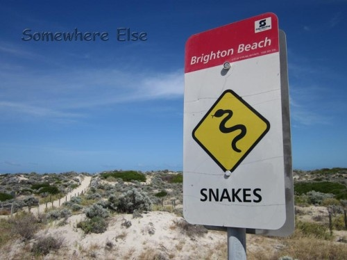 Snakes at the beach