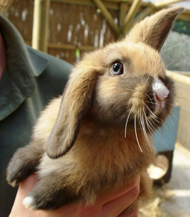 wabbitz:  creeklife:  Cute Bunny at Seaview (cute is right!)  Blue eyed buns are so rad