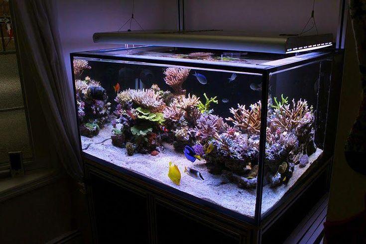 Cool Aquascape | Aquarium, Reef aquarium, Saltwater ...