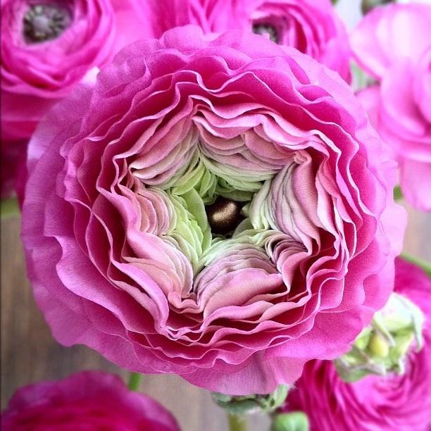 #flowers #beautifulnature by Yael Rozencwajg