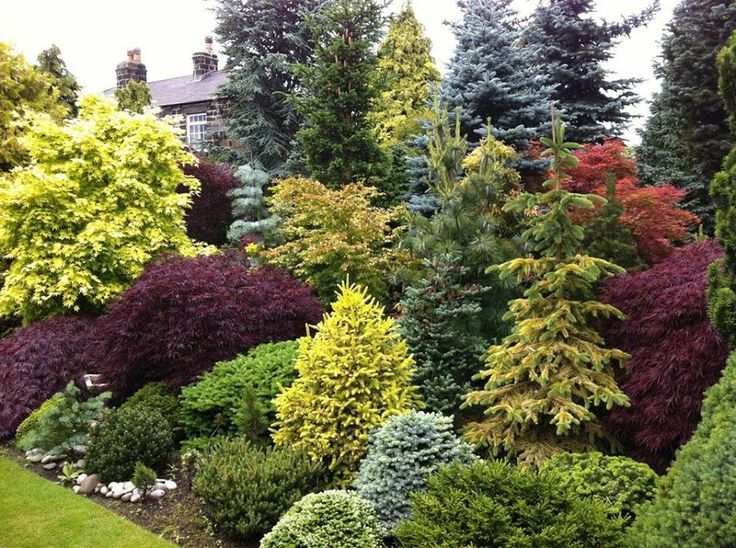 17 best images about front yard conifer ideas on pinterest. Black Bedroom Furniture Sets. Home Design Ideas