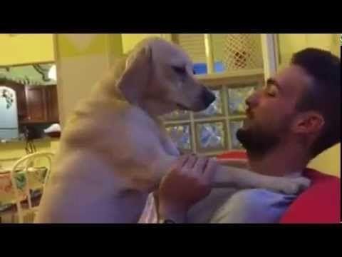 Qué vídeo tan maravilloso... Un perro pide perdón a su dueño por la travesura que ha cometido. La forma que tiene de disculparse es lo más tierno que hemos visto últimamente. Es una auténtica preciosidad.