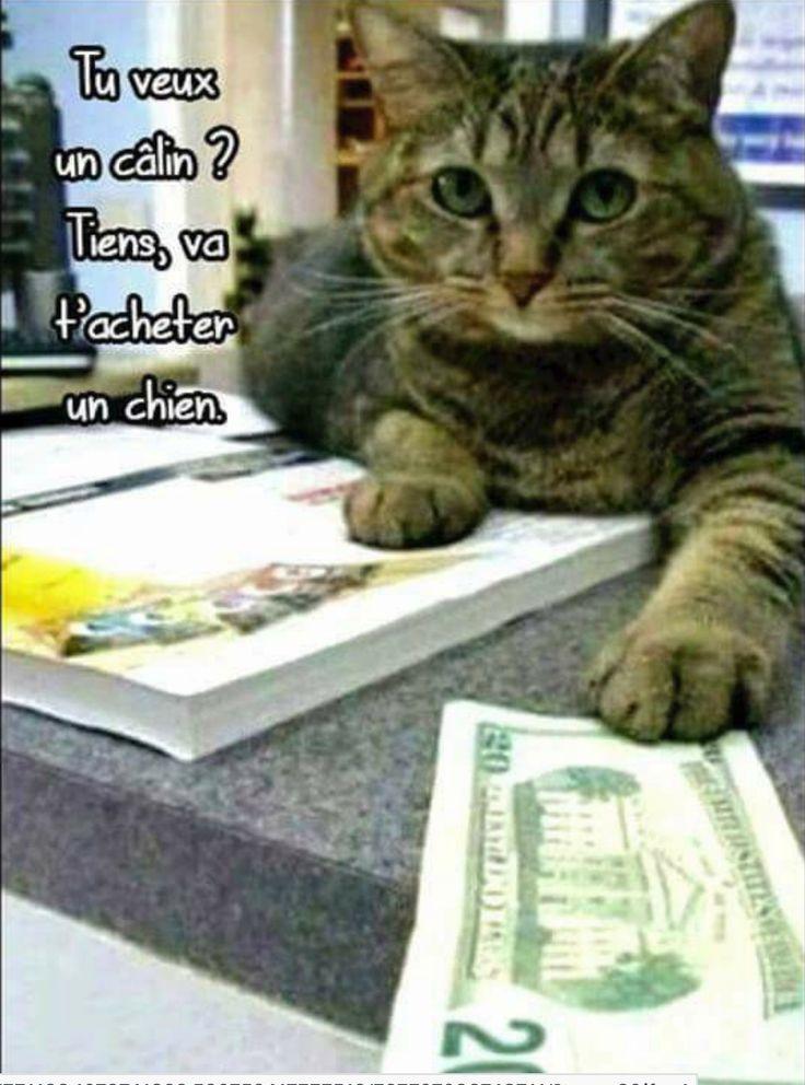 j'aime les chats #chat, #chien #blackfriday