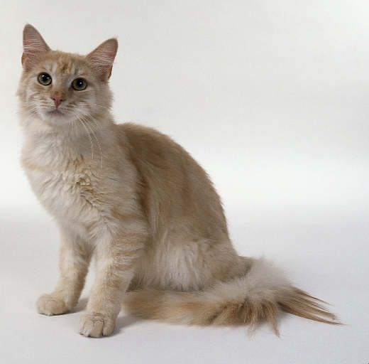 Good Warrior Cat Named For She Cats