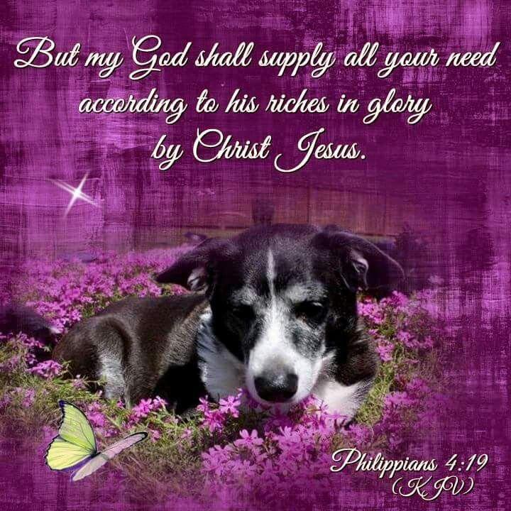 745 best Animals + Bible Verses images on Pinterest
