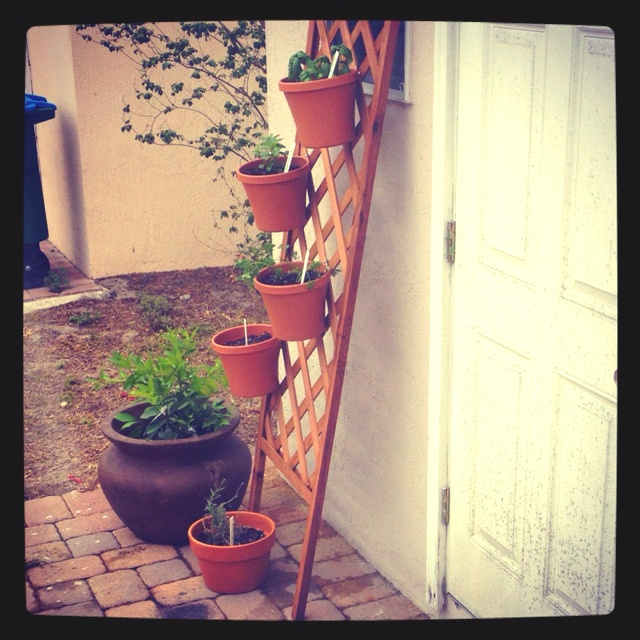 113 best projects garden vertical images on Pinterest