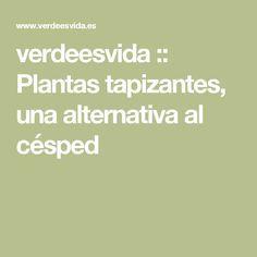 verdeesvida :: Plantas tapizantes, una alternativa al césped