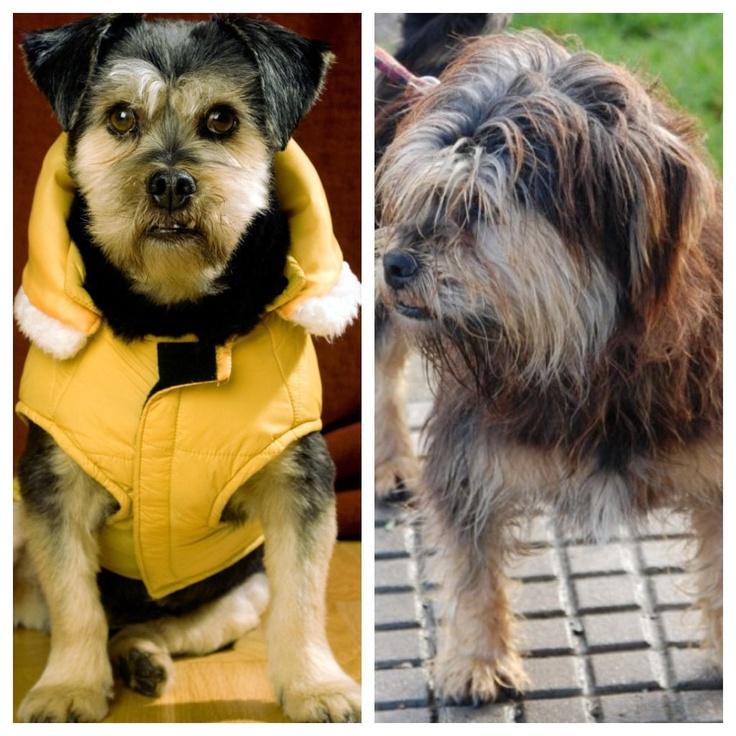 Antes y después 2 . #adopta