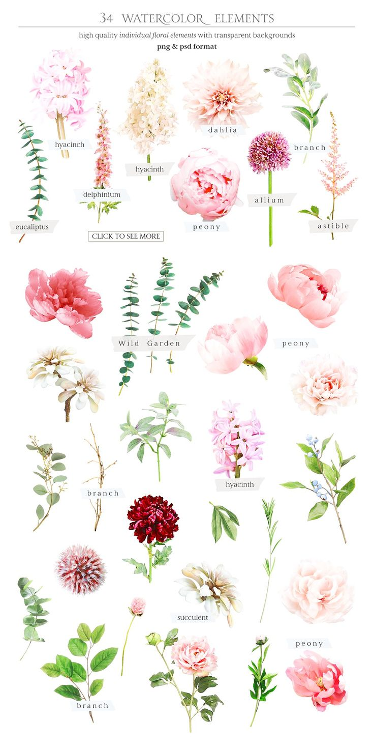 Watercolor Botanical set Illustrations Flower arrangements