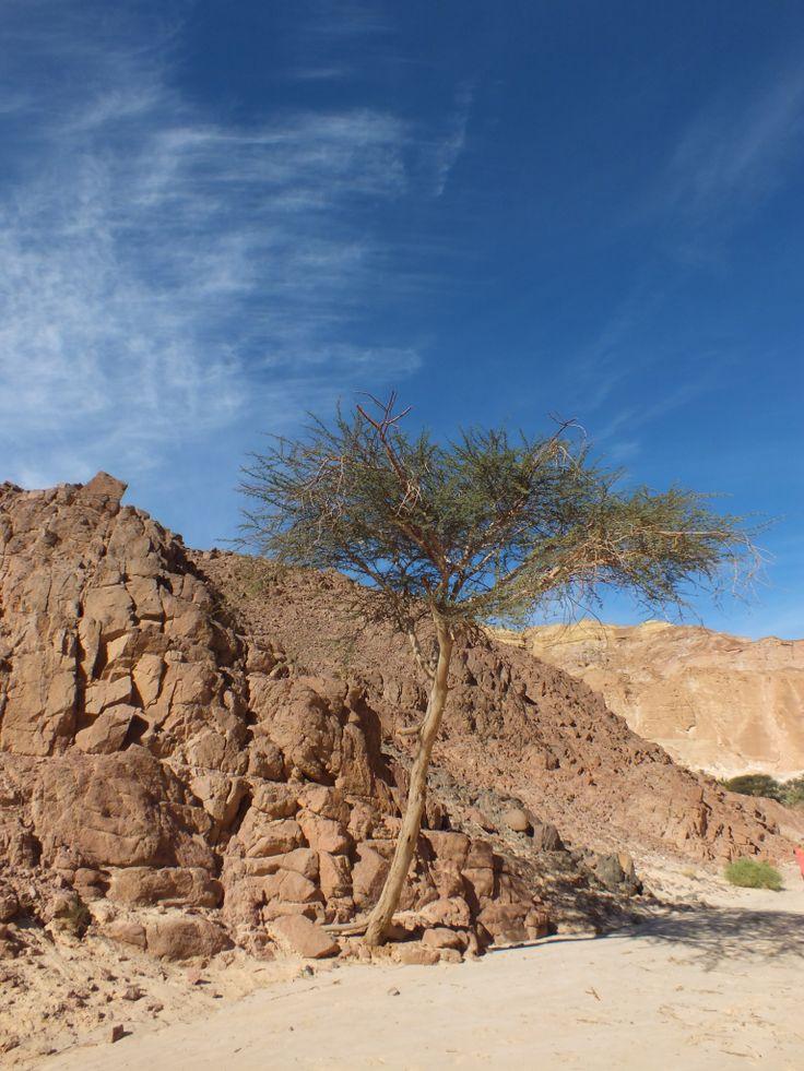 Safary in Egipt