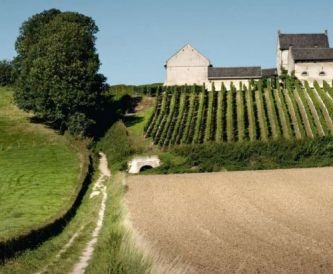 Apostelhoeve Vineyard in Maastricht: only a 20 min walk from my home!