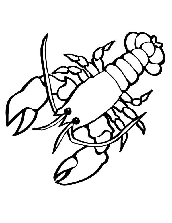 Sea Animals, : Giant Sea Lobster with big Clasp Sea Animals Coloring Page