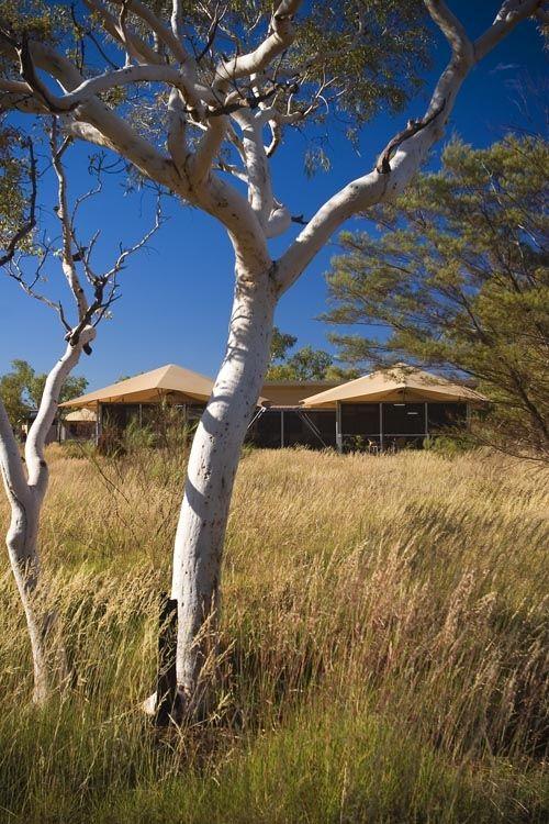 Accommodation - Our beautiful tents at Karijini Eco Resort