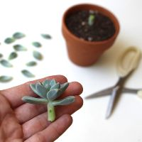 thank you!! i have some succulents at home and i didn´t know exactly how to reproduce them. So this information its very valuable for me!! t...