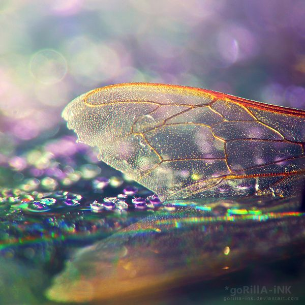 The delicate iridescent wings of a dragonfly remind me how magical and fragile life really is… ~Charlotte (PixieWinksFairyWhispers)