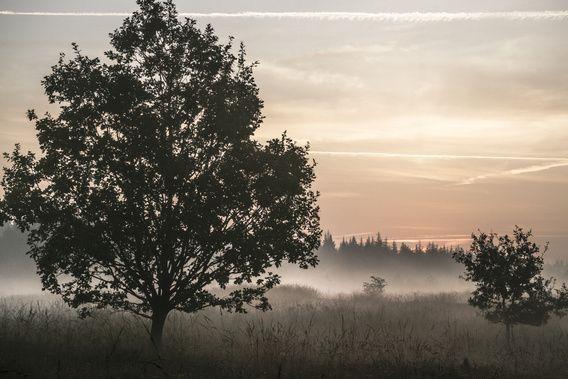 Bordelum, near Bredstedt, North Friesland (DE)