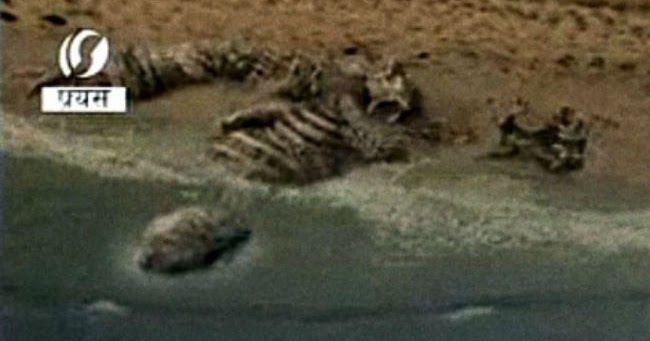 Απίστευτο! Παράξενο πλάσμα ξεβράστηκε σε παραλία