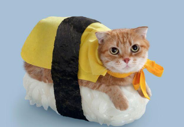 35 Cute Cats in Costumes. So much cuteness!