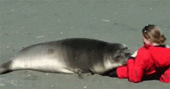 This is so my Mom's cat. He adores her, just like this seal adores this lady!