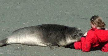 Sun, Sand And Seal