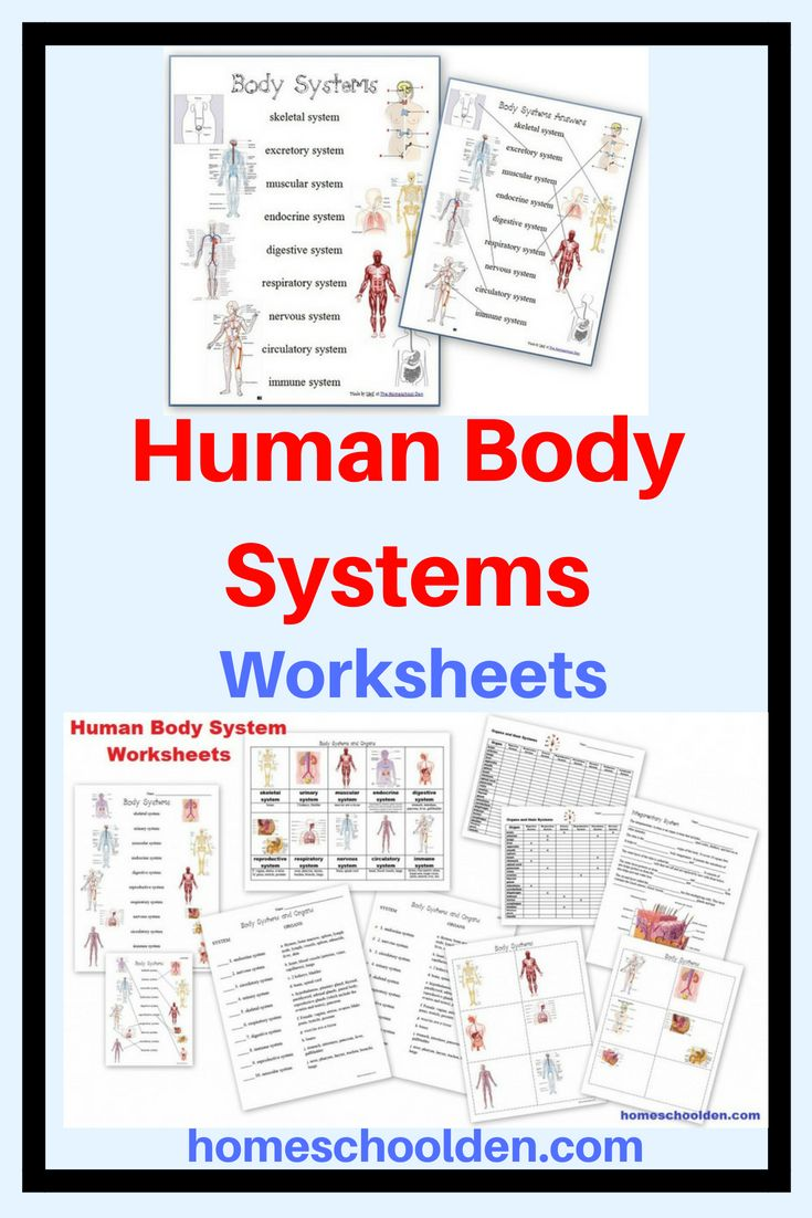 Human Body Worksheets And Notebook Pages Including Systems Matching Pages Notebook Pages About How Body Systems Worksheets Human Body Unit Study Body Systems