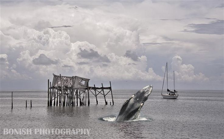 17 best images about cedar key florida on pinterest gray for Cedar key fishing