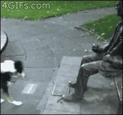 This dog waiting for a statue to throw a stick. | The 40 Greatest Dog GIFs Of All Time