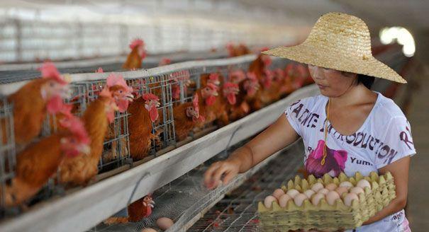 Opinion: Protect American food innovation - Sen. Debbie Stabenow - POLITICO.com