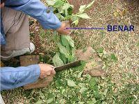 Mesin pencacah kompos ini digunakan untuk mencacah / merajang bahan baku kompos seperti limbah dapur , limbah kebun . setelah dicacah maka nantinya akan diharapkan menghasilkan potongan kecil-kecil limbah organik , sehingga akan mempermudah untuk proses pengomposan.
