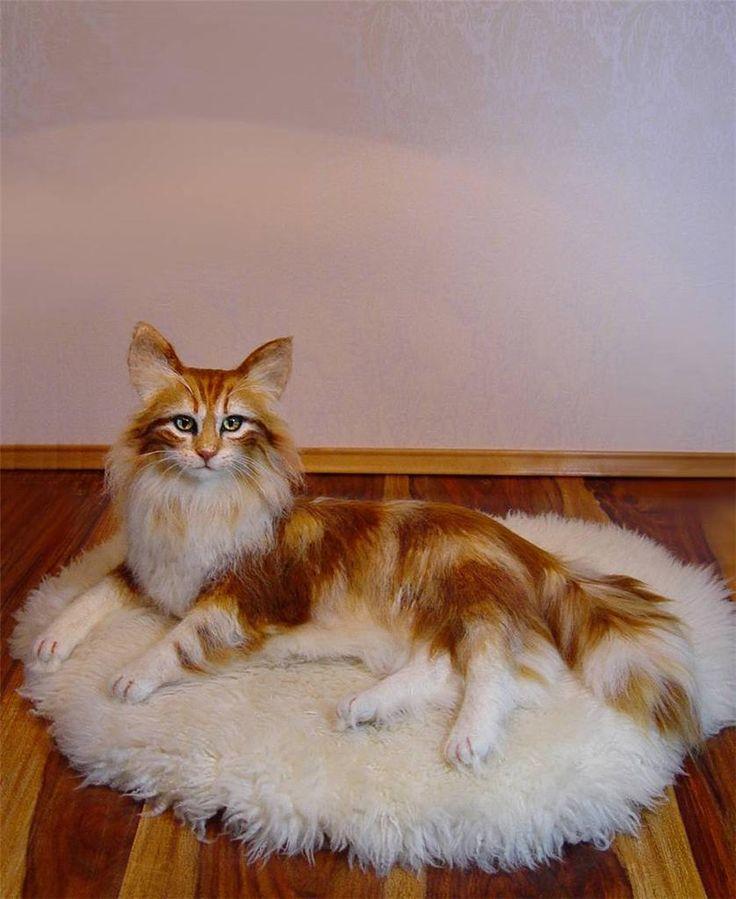 Lifelike Needle-felted Maine Coone Cat