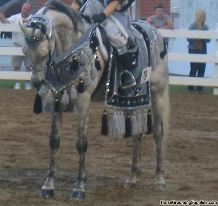 Arabian Native Costume | Discuss Arabian native costume at the Horse Classifieds forum - Horse ...