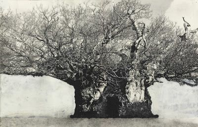Patrick Van Caeckenbergh  Drawing of Old Trees, 2010  pentel 120 3DX - 0,5 mm A315 on paper  18,5 x 28,6
