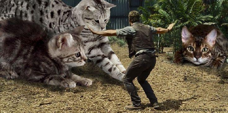 Jurassic Cats : un fan remplace les dinosaures de Jurassic Park par des chats