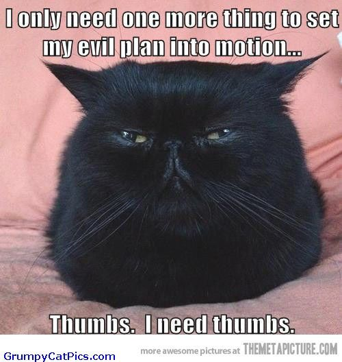 angry cat pictures with captions | ... Looks Evil And Angry Funny Picture - Funny Cats Pictures With Captions