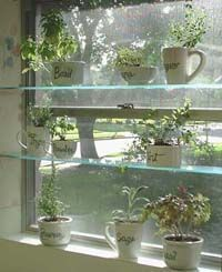 Spice Up Your Kitchen with an Easy Window Herb Garden. ** See even more