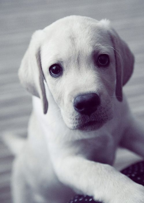 White dog ...........click here to find out more http://googydog.com P.S. PLEASE FOLLOW ME IN HERE @Yulia Bekar Bekar watson