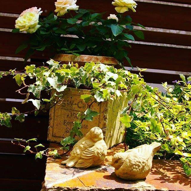 お気に入りの #雑貨 をおいて、#お庭  に私らしさを演出。#ザシーズン #ガーデン #ガーデンデザイン #庭 #緑のある暮らし #アイビー #ミニバラ #小鳥 #ウッドフェンス #photo #love #garden #gardendesign #theseason #花 #庭づくり
