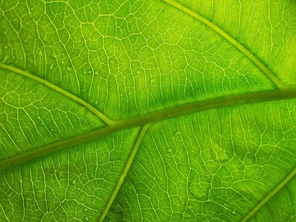 Credit: Christoph Rupprecht; Leaf Structure VII, CC 2.0