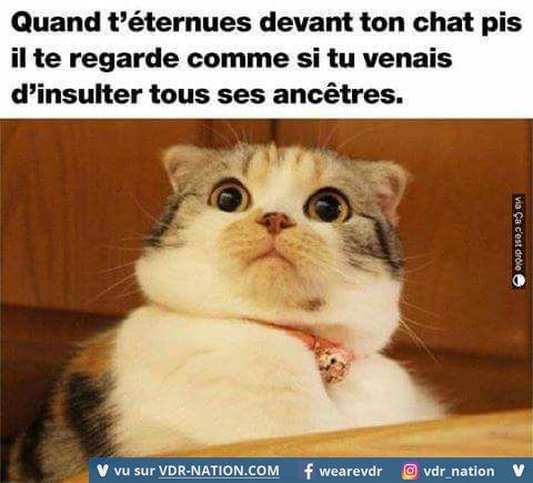 Éternuer devant son chat