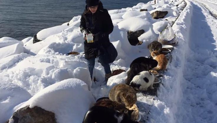 - Tato žena tráví volný čas krmením opuštěných koček, které by jinak zahynuly