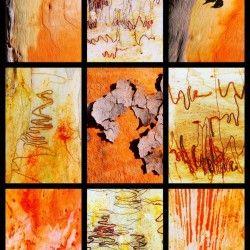 Salmon and Scribbly Gum Tree Bark Lexa Harpell Canvas