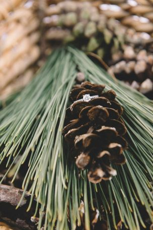 We're loving Brock's grandmother's ring nestled in the pinecone! || Dana and…