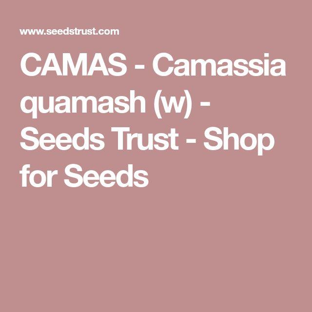 CAMAS - Camassia quamash (w) - Seeds Trust - Shop for Seeds