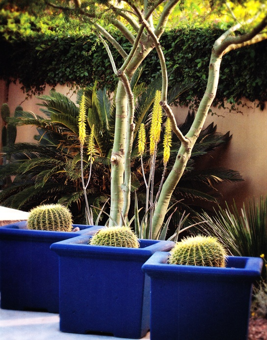 Cobalt blue #garden planters make a dramatic statement in any yard.: Garden Planters, Blue Containers, Dramatic Statement, Blue Garden, Gardening Ii, Cobalt Blue, Container Gardening, Concept Sedona, Garden Oasis