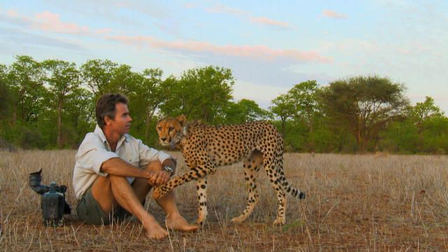 Man, Cheetah, Wild: Living Among Cheetahs : Video : Discovery Channel