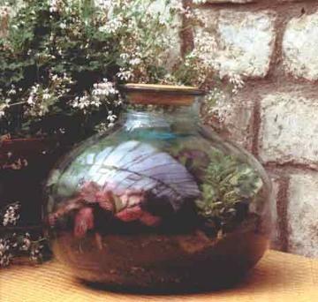 Садик в закрытой емкости (аквариум, террариум, бутыль) - Все о комнатных растениях на flowersweb.info
